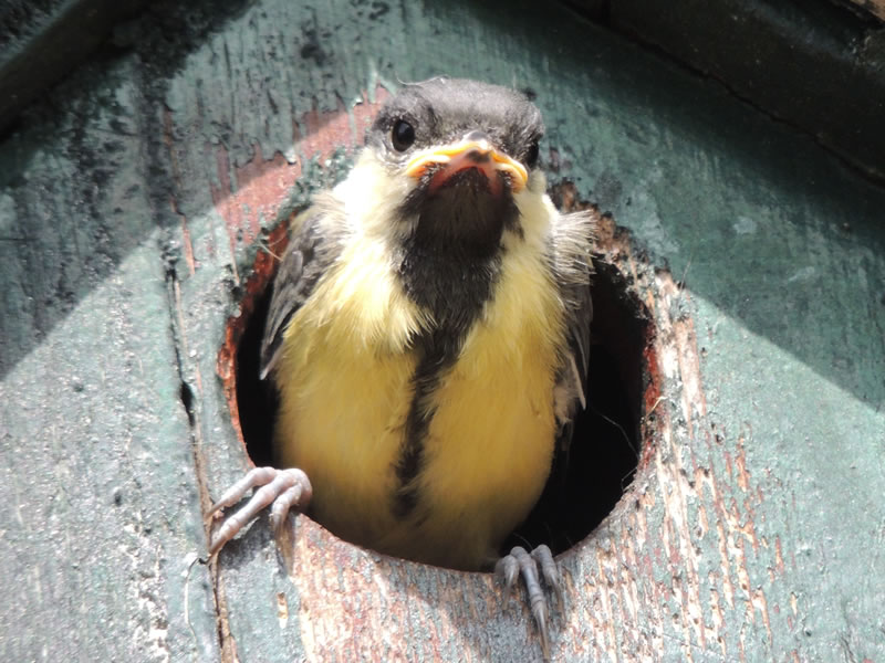 Bird in the nest box